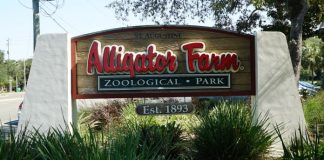 St. Augustine Alligator Zoological Park - Saint Augustine - Florida